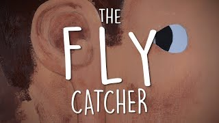 The Fly Catcher