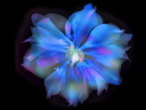 Q A With Harold Davis Creative Flower Photography