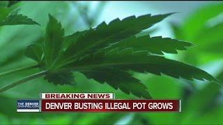 Denver Police target illegal marijuana grows, more than 30 addresses involved