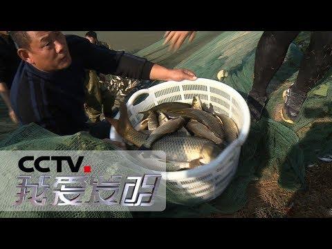 《我爱发明》 百变鱼箱 让养鱼有了新的思路 20181225 | CCTV科教