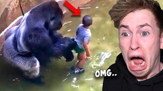 Als dieser Junge in ein Gorilla-Gehege fiel, passierte das Unglaubliche..
