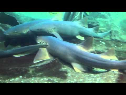 West Edmonton mall aquarium
