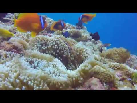Diving - Lanyu ( Orchid) Island, Taiwan