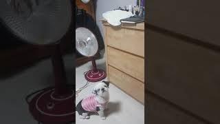 화장대 위에 옷이 입고 싶은 코코 (1) | 황코코