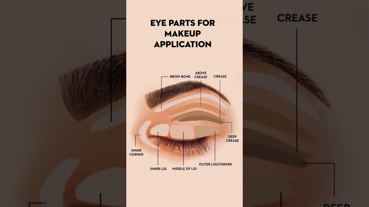 Eye Parts For Makeup Application | Eye Makeup | #shorts | SUGAR Cosmetics