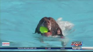 Preventing water intoxication and heat exhaustion in dogs