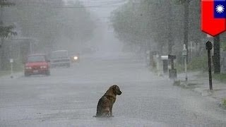 Брошенный пёс терпеливо дожидается своего хозяина