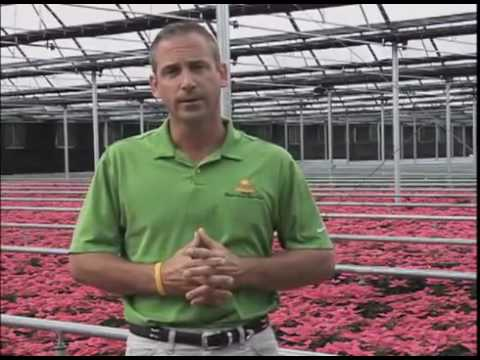 Sunshine Growers Nursery Virtual Nursery Tour Craig Roth