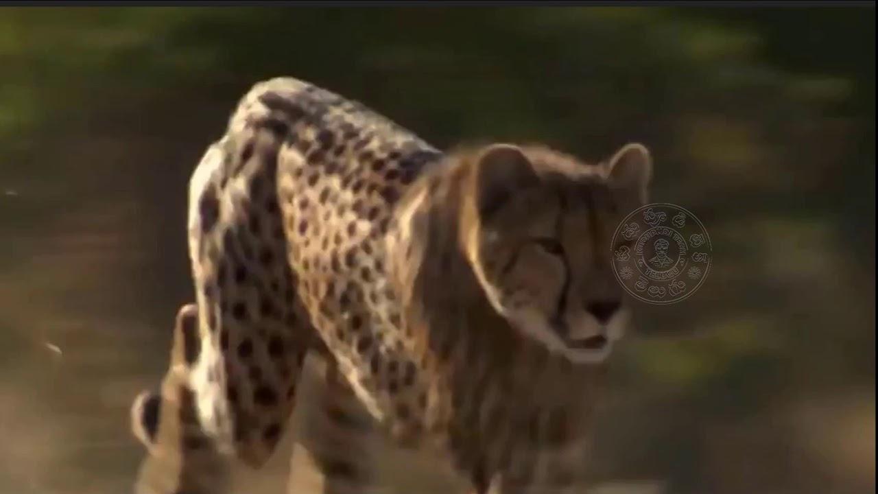 Top 10 MOST POWERFUL ANIMALS in the World including Tiger, Rhino, Pola  Kudupudi Tech telugu