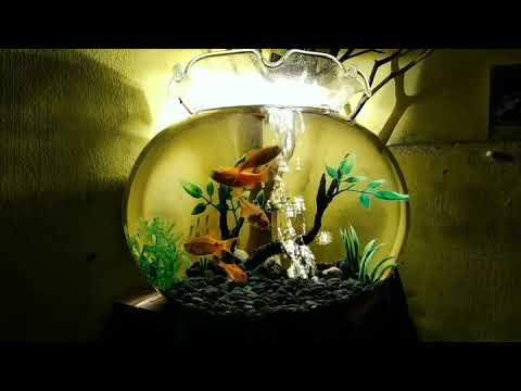 Desain Aquarium Bulat Untuk Kamar Youtube