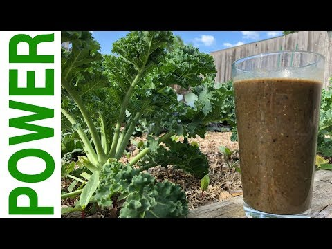 Kale Shake that TASTES GREAT  *Vegan* Clean Food for Workout & BJJ Recovery