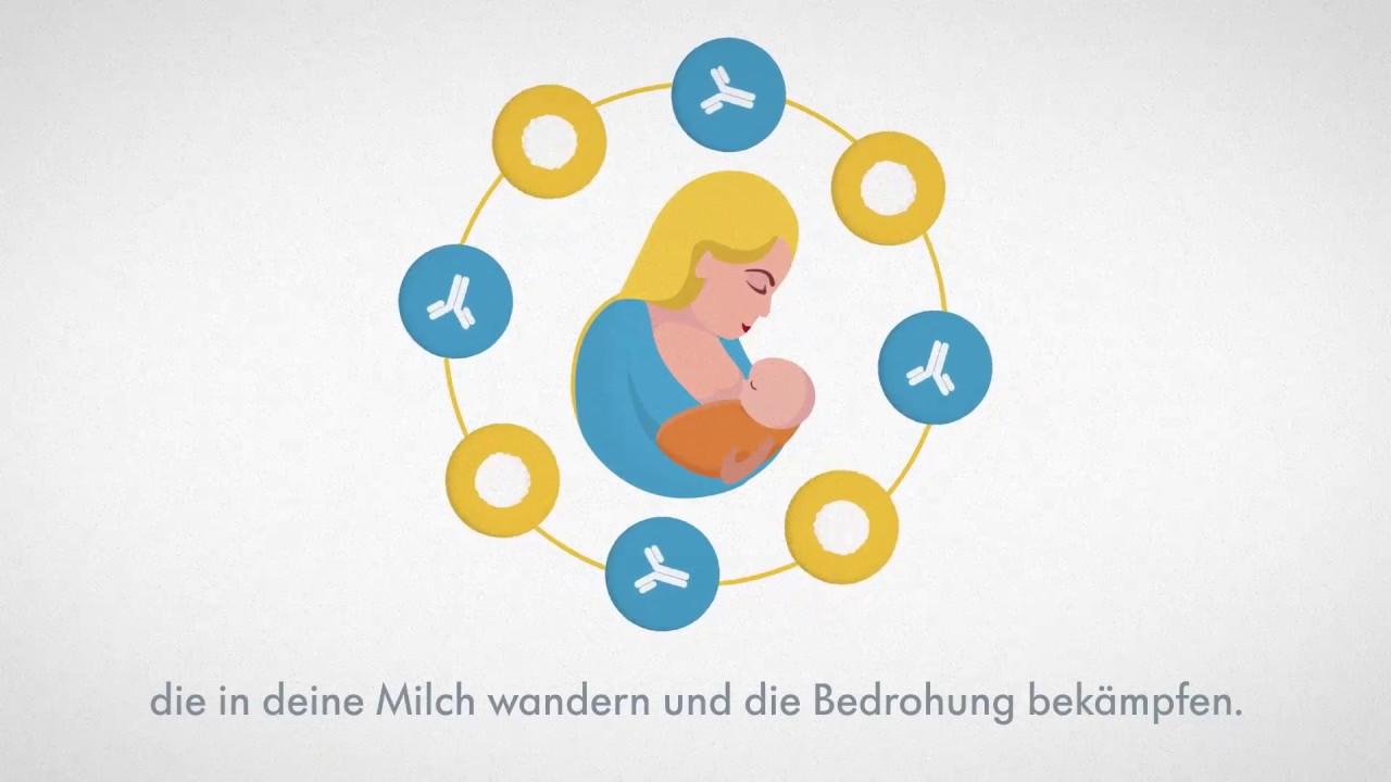 1. bis 6. Monat – Was ist in jedem Tropfen Muttermilch enthalten?