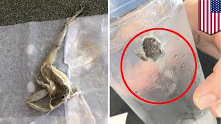 Waffle House frog  Couple find disgusting dead frog in water glass at Tallahassee diner   TomoNews