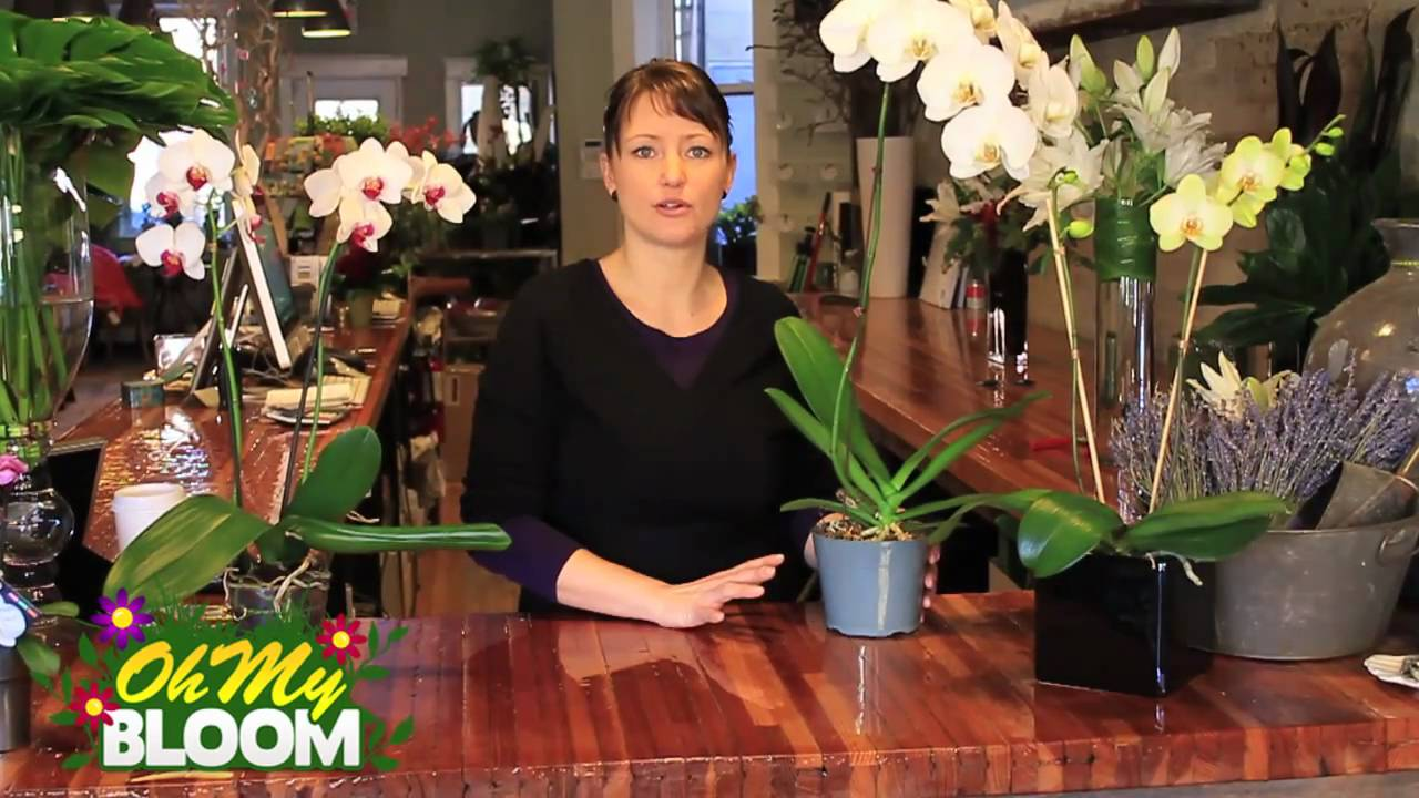 How To Properly Care For Orchids Youtube