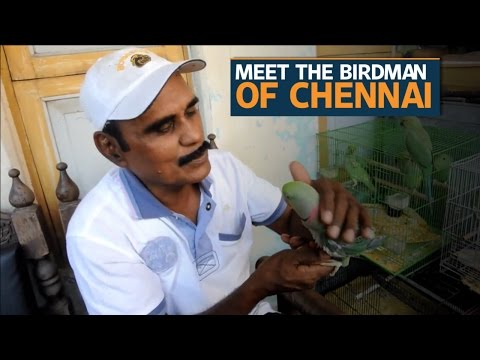 'The Birdman of Chennai' feeds 8,000 parakeets a day