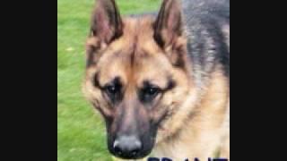 Happy Endings Part 7-german Shepherd Rescue