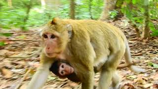 Mother Monkey Beats Her Baby Very Hard