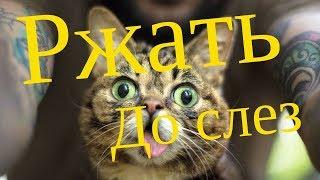 Хотите описаться от смеха - смотреть всем - кошки видео приколы. Смотреть под чем-нибудь!
