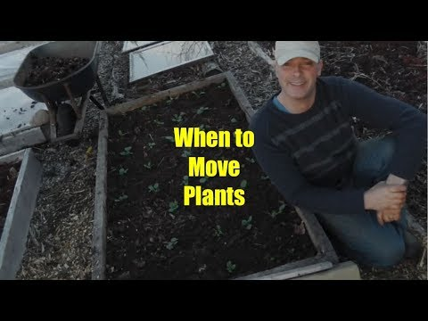 How and When to Re-position Plants