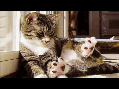 Cats are so funny you will die laughing Funny cat compilation
