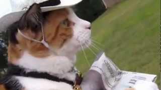 חתולונובלה - המרד!