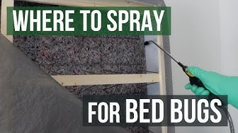 Where to Spray for Bed Bugs: Bed Bug Control