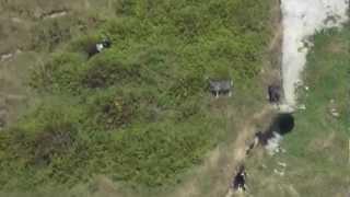 Remington R5 308, goat, 835 yards