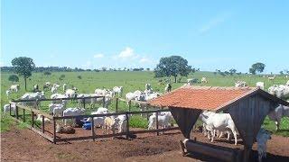 Curso Instalações E Equipamentos Para Pecuária De Corte - Creep Feeding - Cursos Cpt