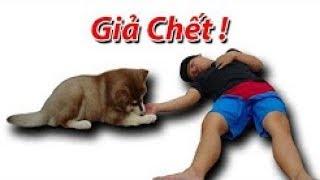 NTN   Giả Chết Troll Chú Chó Alaska  Playing Dead With Dog