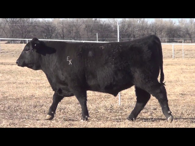 Express Ranches Lot 62