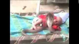 Mircale in India!! 4 Cobra Protect Sleeping Baby Girl!!