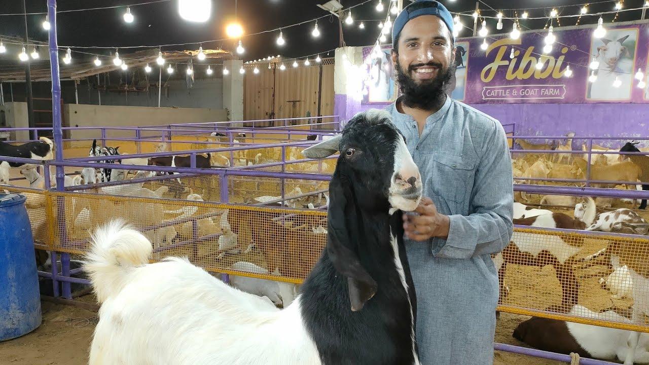 Rare Nachi Goat   AR Maani