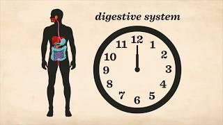 TED ED Как работает пищеварительная система на русском