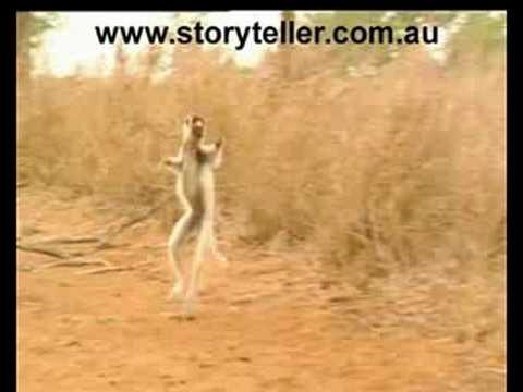 Madagascar's Dancing Lemurs | Storyteller Media