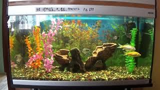 Наш аквариум и виды аквариумных рыбок.