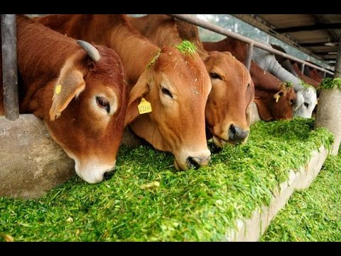 Rajasthan Government To Launch Cow Survey In State