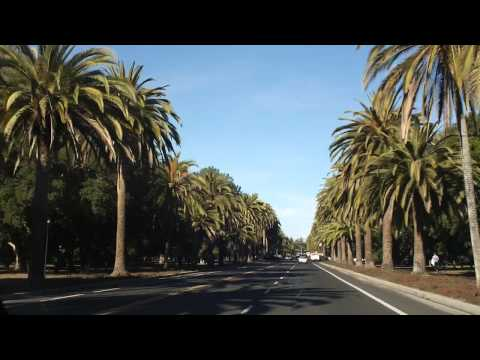 8000 Miles of Gratitude   30   Palm Drive   Stanford   2