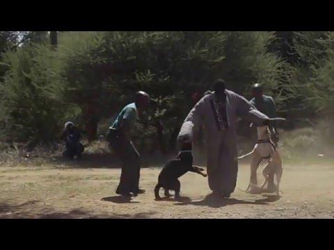 Botswana Boerboel Walk official video