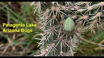 Patagonia Arizona Insects Part 8 #insectcollecting #entomology #insects