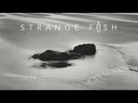 Yaşam Hancılar Band - Strange Fish - Album Teaser