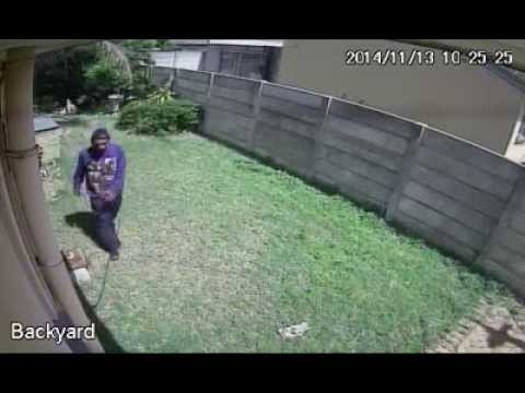 Tiny Dog Makes Robber Jump over the wall!