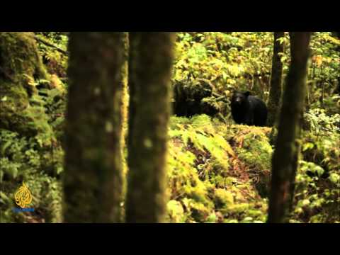 earthrise -Bees of Berlin & Conserving Canada's Great Rainforest