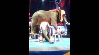 Univer Soul Circus 2014