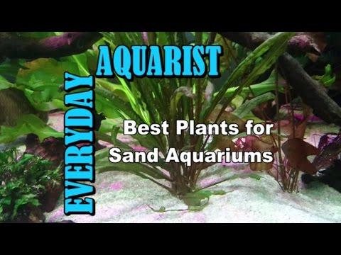 Best Plants For Sand Aquariums