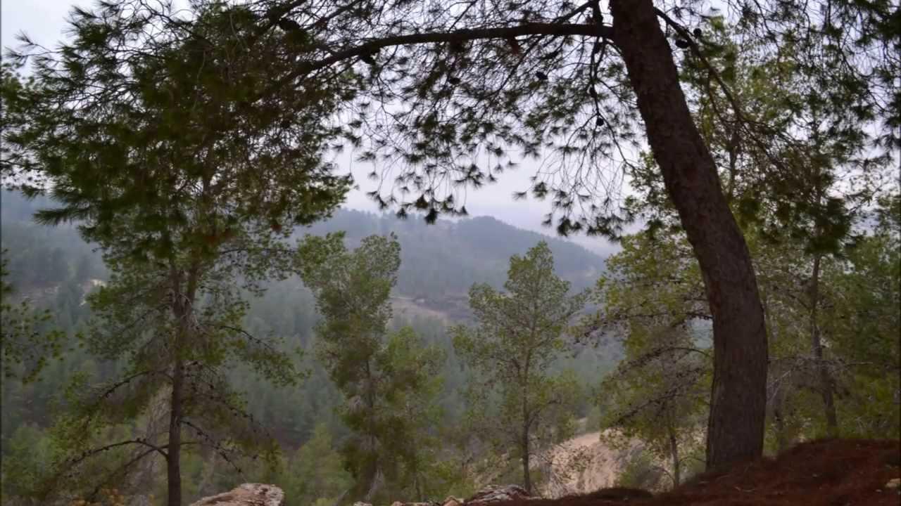 Download yatir forest