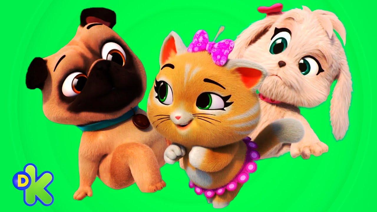 Diversión entre perritos y gatitos   44 Gatos   Discovery Kids