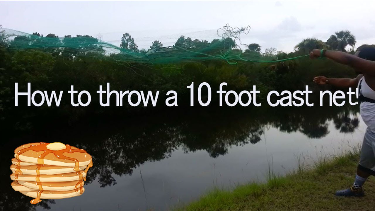how to catch shad without a cast net