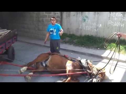 Weak horse & Bulgaria Gypsy