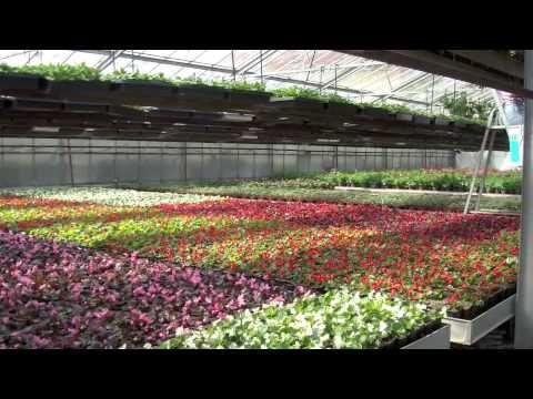 horticulture buhl