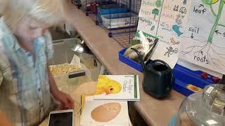 Проектное обучение.  Класс Яна изучает цикл появления птенцов